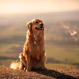 Floh by Michael Norbert - Animals - Dogs Portraits ( hill, mountain, rodenstein, sunset, walberla, dog, ehrenbürg, portrait,  )