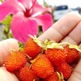 wild berry by Marx Perfecto Garcia - Food & Drink Fruits & Vegetables ( wild, fruit, volcano, bitter sweet, berries )