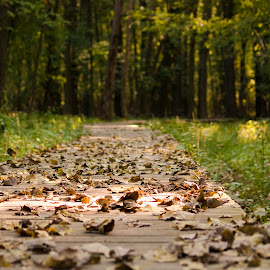 A Walk in the Forest by Catherine Larocque - Landscapes Forests ( nature, autumn, forest, leaves, boardwalk, québec,  )