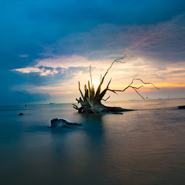 Dancing tree trunk during sunset by CK Chong - Nature Up Close Trees & Bushes ( wetland during water low tide ~ west malaysia )