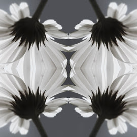 by Dominic Wade - Digital Art Abstract ( abstract, macro, adobe photoshop, manipulated image, symmetry )