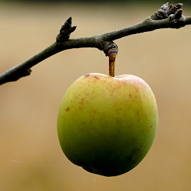 The Apple by Mick Wells - Nature Up Close Gardens & Produce ( fruit )