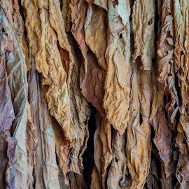 Hanging Tobacco by Ed & Cindy Esposito - Abstract Patterns ( amish, hanging, barn, tobacco, smoke )