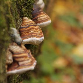 Mantar by Recep Cenbek - Nature Up Close Mushrooms & Fungi ( yakın çekim, mantar, ağaç mantarı )