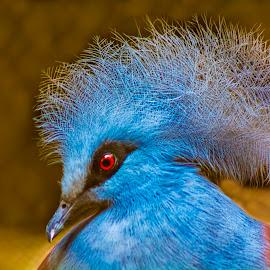 BIRD_51_2017  by Malay Maity - Animals Birds ( bird, animal )