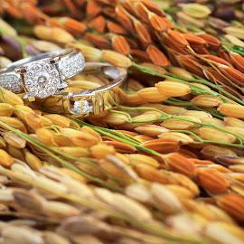 Close Up Wedding Ring by Andy Hazwandy - Wedding Details ( ring, macro, wedding, kuching, paddy, texture, malaysia, couple, sarawak )