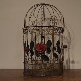 Bird Cage by Amanda Olejniczak - Artistic Objects Antiques ( rose, bird cage, artistic object, cage, antique )