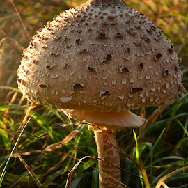from the fairytale by Rux Georgescu - Nature Up Close Mushrooms & Fungi ( mushroom, nature up close, mushrooms )