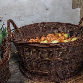 basket of onions by Vibeke Friis - Food & Drink Fruits & Vegetables ( vegetables in baskets )