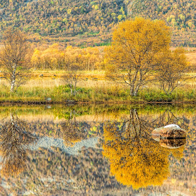 Fallcolors by Benny Høynes - Landscapes Prairies, Meadows & Fields ( water, autumn, fall, reflections, norway )