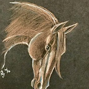 Horse Portrait by Anika McFarland - Drawing All Drawing ( horse portrait, horse, drawing, portrait, animal,  )