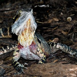 Alert by Sarah Sullivan - Novices Only Wildlife