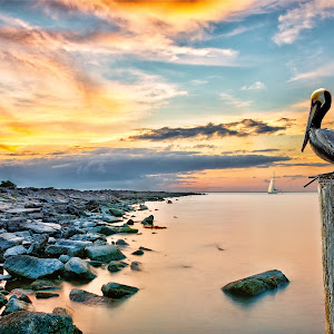 Pelican Point.jpg