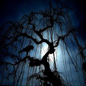 Night by Zoran Nikolic - Nature Up Close Flowers - 2011-2013 ( plants )