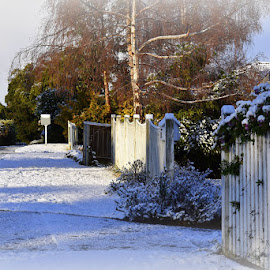 My street by Anne Andrews - Novices Only Landscapes ( suburbs, tasmania, australia, hobart, rare snowfall )