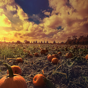 The Season Opener by Sushmita Sadhukhan - Landscapes Prairies, Meadows & Fields ( field, evenig, grass, sunset, pumkin, festival, leaves, patch, pumpkins, halloween )