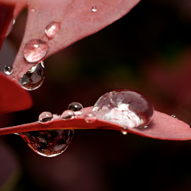 some water drops by Joseph Balson - Nature Up Close Natural Waterdrops