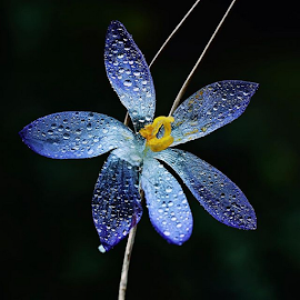 by Arjo van Timmeren - Flowers Single Flower ( heart_imprint, passione_fotografica, passion_for_flower, FlowerStalking, nature_up_close, macroworld_tr, floral_secrets, top_macro, flowersandmacro, my_daily_flower, exclusive_flower, the_solo_project, 9Flower9, pocket_family_member, awesome_florals, ip_blossoms, igscflowers, fotofanatics_nature_, nature_up_close, ptk_flowers_members, superb_flowers, macro_vision, loves_flowers_, fiftyshades_of_nature, photoarena_nature, igpowerclub, igglobalclubmacro, inthemoodfor_macro, mta_macro, pasandha_flowers, macro_highlight )