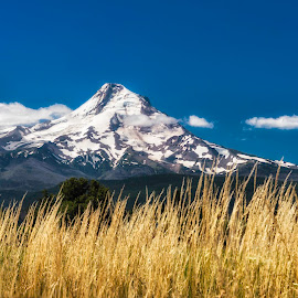 Mt Hood by Chris Bartell - Landscapes Mountains & Hills ( mountain, hood river, mt hood, landscape, hood )