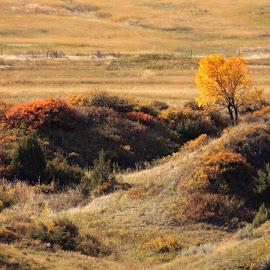 by Liz Huddleston - Landscapes Prairies, Meadows & Fields ( hillside, color, montana, fall, leaves )