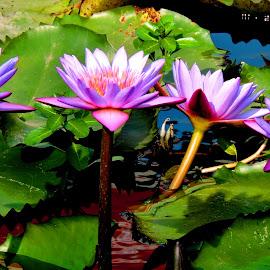 BEAUTIES by SANGEETA MENA  - Flowers Flowers in the Wild (  )