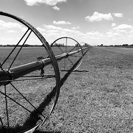 by Sean Michael - Landscapes Prairies, Meadows & Fields