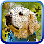 Free Download Jigsaw Puzzle Master APK for Samsung