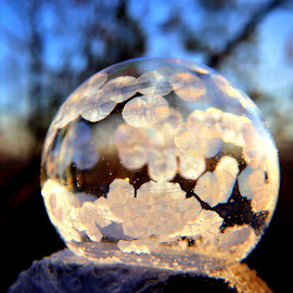 by Crystal  Wilson - Abstract Macro (  )