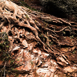 Exposed Roots by Helen Roberts - Nature Up Close Trees & Bushes
