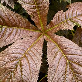 by Dennis Rathbun - Nature Up Close Leaves & Grasses