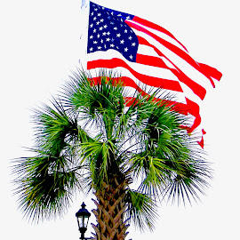 amercina Palmetto by Hugh McLaren - Public Holidays July 4th