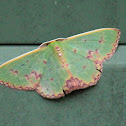 Northern Emerald