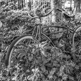 Consumable by Gary Piazza - Transportation Bicycles ( bike, black and white, plants, earth, transportation, bicycle )