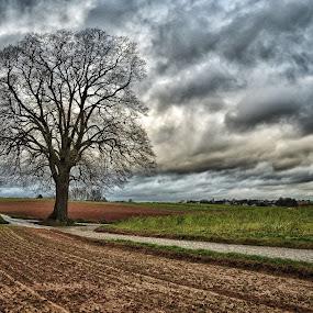 by Nick Vanderperre - Landscapes Prairies, Meadows & Fields (  )