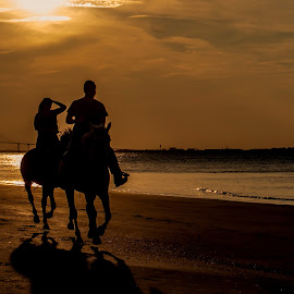 Sunset Ride by Ruth Sano - Landscapes Sunsets & Sunrises ( horseback, silhouette, sunset, beach, people )