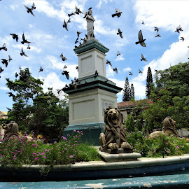 Birds in flight by Holly Hatcher - Landscapes Travel ( #pigeons, #parque, #centralsquare, #leon, #nicaraqualove )