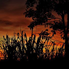 Itapura MS Brazil by Marcello Toldi - Landscapes Sunsets & Sunrises