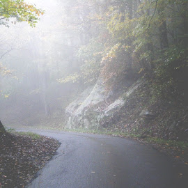 Foggy drive by Mary Gallo - Landscapes Mountains & Hills ( foggy, mountains, fog, weather, landscape )