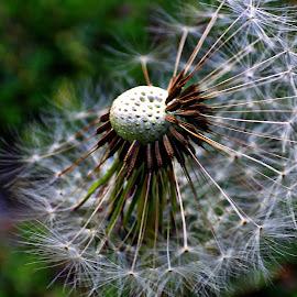 by Karen McKenzie McAdoo - Nature Up Close Other plants