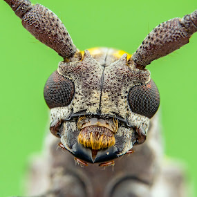 by Tan Tc - Animals Insects & Spiders ( extreme, nature, macro photography, insects, close up,  )