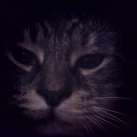 by Alegna Nehc - Animals - Cats Portraits