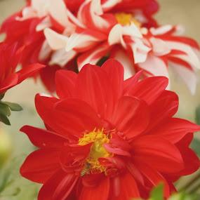 FLOWER AND ITS COMPANION by Soumaya Karmakar - Flowers Single Flower ( flower,  )