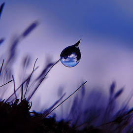 Dew by Arie Azdhana - Abstract Macro