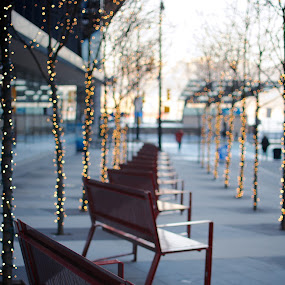 Bench Row by Scott Hemenway - City,  Street & Park  Street Scenes ( lights, bench, trees, vancouver, row )