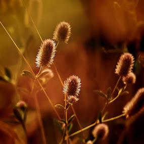 by Sirinat Tanamai - Nature Up Close Other plants