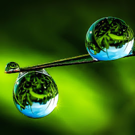 the dew's by Kawan Santoso - Nature Up Close Natural Waterdrops