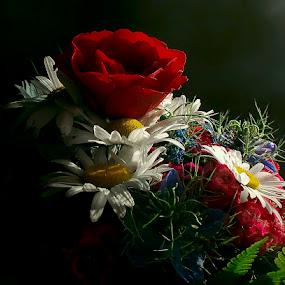 by Nicolaie Subotin - Flowers Flower Arangements (  )