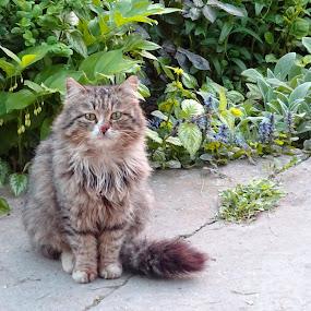 cat by Dobrinka Ivanova - Uncategorized All Uncategorized ( cat )