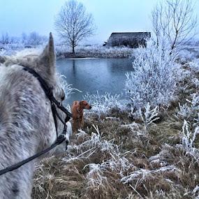Winter ride by Ivana Tilosanec - Instagram & Mobile iPhone ( rhodesian ridgeback, winter, nature, pet, horse riding, horse, pets, croatia, wildlife, lake, view, landscape, dog,  )