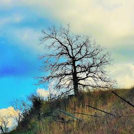 Shoe Factory Tree by Beth Bowman - Landscapes Prairies, Meadows & Fields (  )